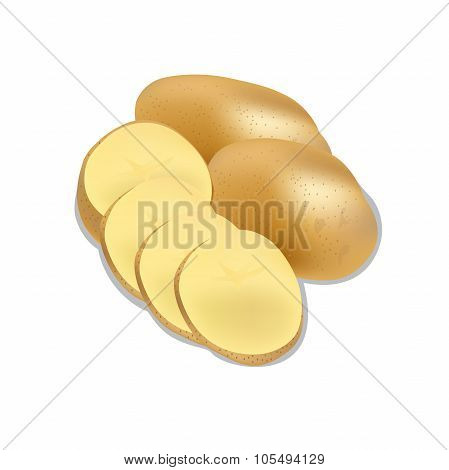 potato isolated on white background close up, vector illustration