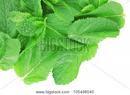 Pile of fresh mint isolated on white