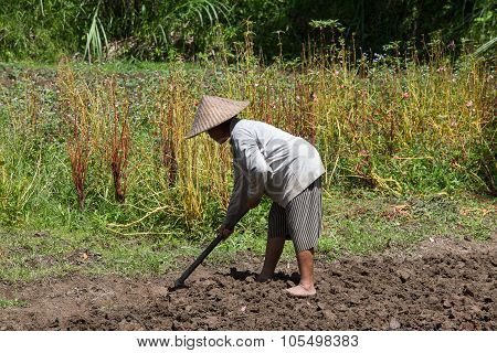Old Woman Farmer Holding Spade At Field. Bali, Indonesia.