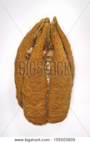 Detail of cuban ceiba tree seed isolated over white