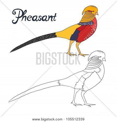 Educational game coloring book pheasant bird