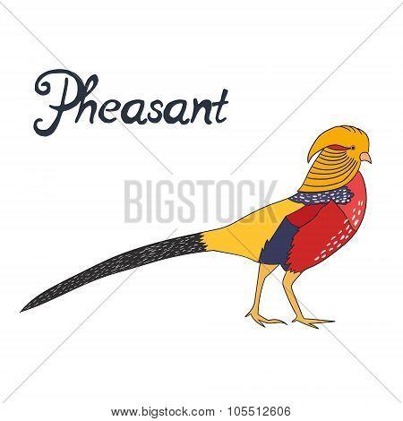 Bird pheasant vector illustration