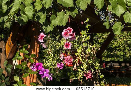 Vine with grapes and geraniums