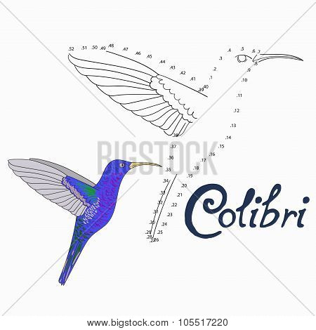 Educational game connect dots to draw colibri bird