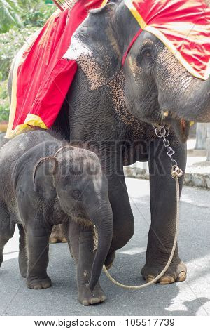Baby And Mother Elephants In Zoo
