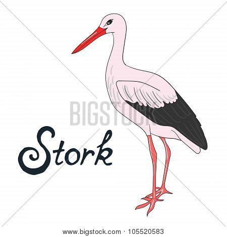 Bird stork vector illustration
