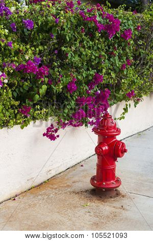 Red fire hydrant on street with blooming purple bougainvillea in Key West, Florida Keys, USA.