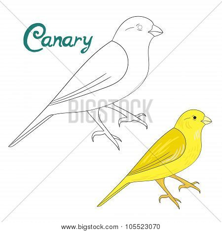 Educational game coloring book canary bird