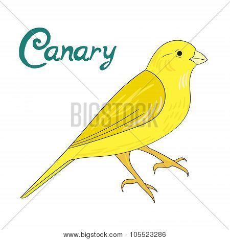 Bird canary vector illustration