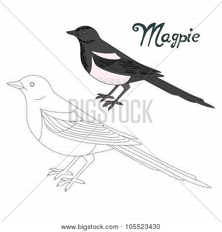 Educational game connect dots to draw magpie bird