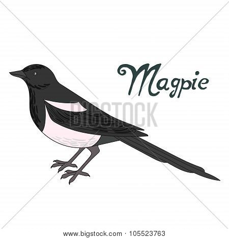 Bird magpie vector illustration