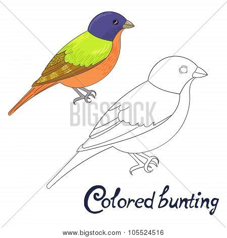 Educational game coloring book bird