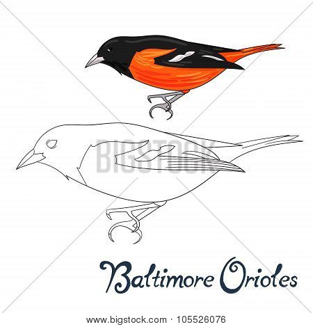 Educational game coloring book bird