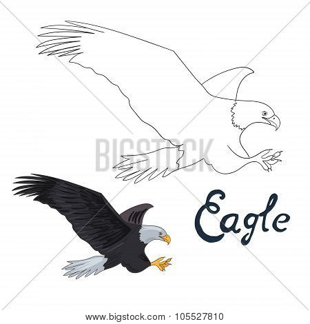 Educational game coloring book eagle bird