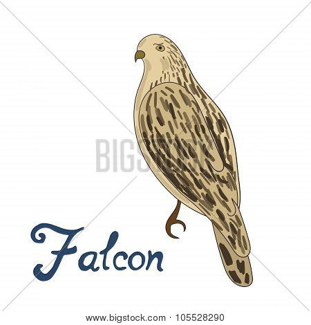 Bird falcon vector illustration