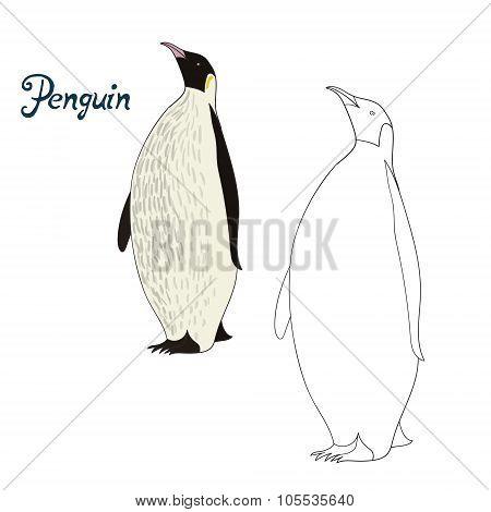 Educational game coloring book penguin bird vector