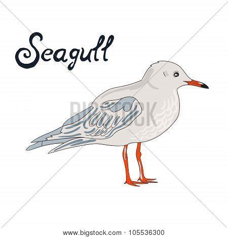 Bird seagull vector illustration