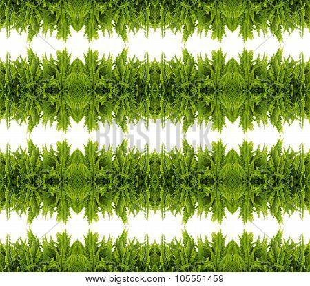 Tuber Sword Fern Seamless Pattern Background