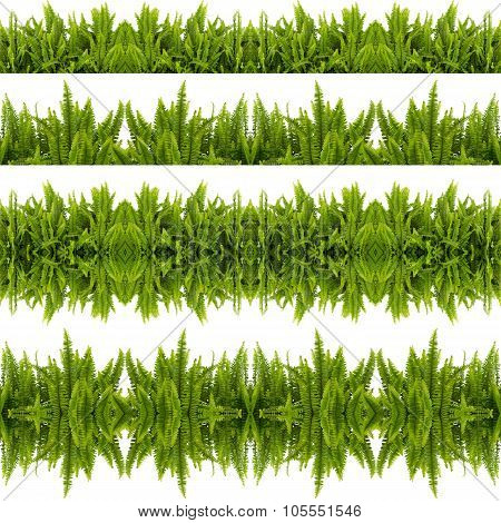 Tuber Sword Fern Seamless Pattern Isolated On White Background