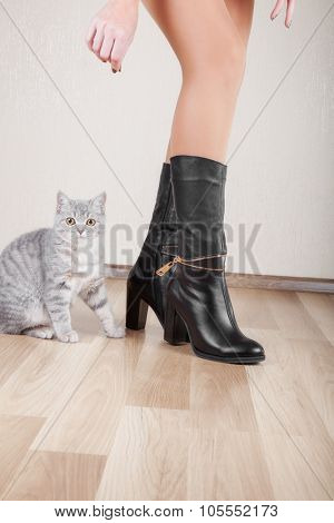 Beautiful patent leather shoes with thin legs and a cat