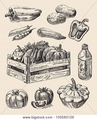 hand drawn food sketch