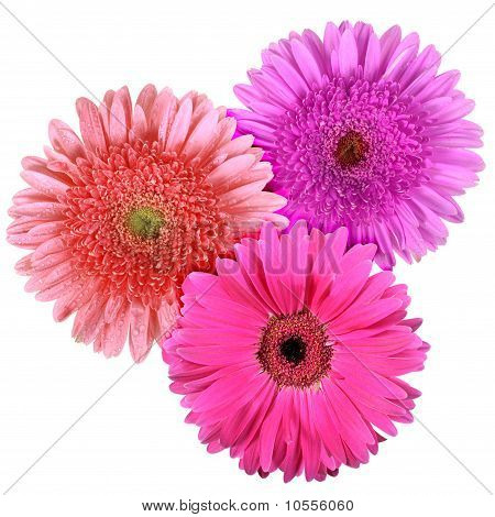 Set Of Three Flowers Isolated On White Background