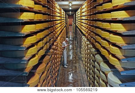 Row Upon Row Of Cheese Left To Mature In A Cellar