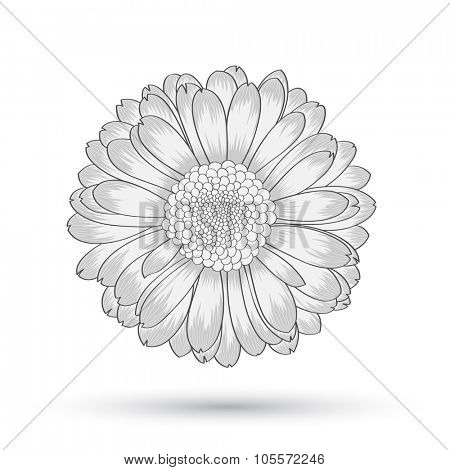 Abstract floral background. Vector flower gerbera. Element for design.