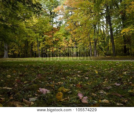 Autumn Leaves in front of Trees