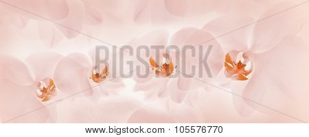 Orchids On Light Background