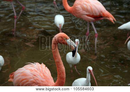 Pink flamingos having fun