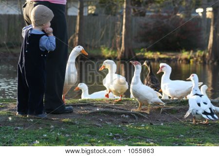 Scared Of Ducks