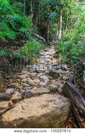 The Path In The Tropical Jungles Of South East Asia