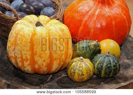 Autumn Decoration, Pumpkin, Gourd, Plums