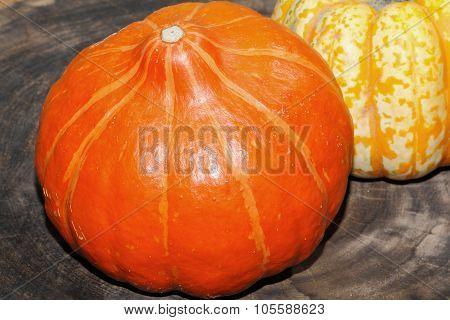 Autumn Decoration, Pumpkin, Gourd