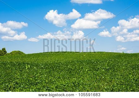 Rolling Farm Field Horizon Under Cumulus Clouds