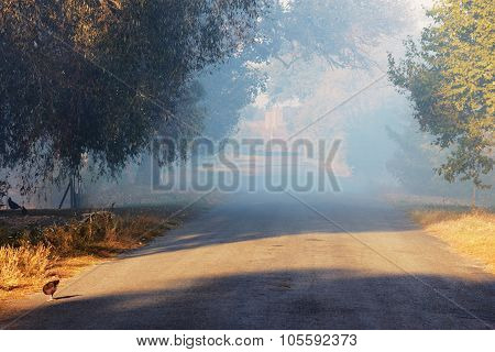 Rural Landscape In Mist