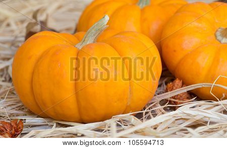 Mini Pumpkin Closeup