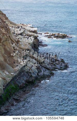 Seaguls And Rocks In La Jolla Bay,  California