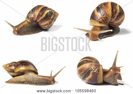 beautiful Snail isolated on white