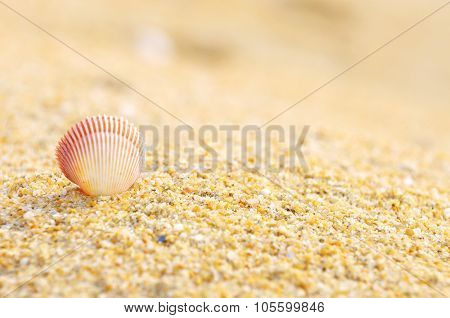 Shell Clam On The Sand At The Beach