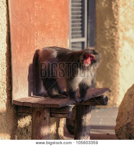 Monkey Sit On The Special Support