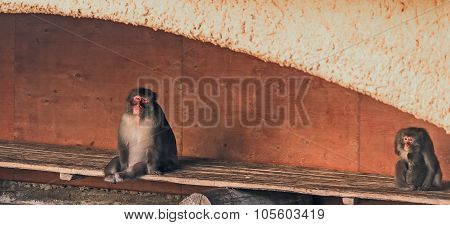 Two Monkeys Sitting On The Bench
