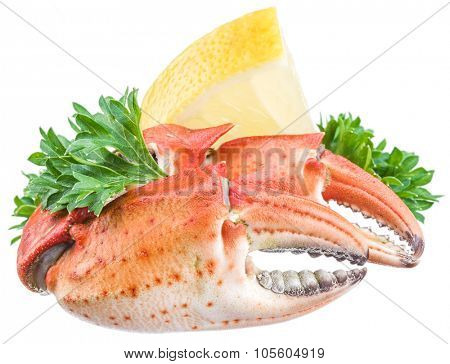 Cooked crab claws with lemon and herbs on a white background.