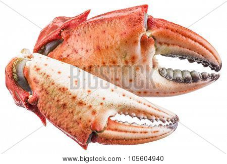 Cooked crab claws. File contains clipping paths.