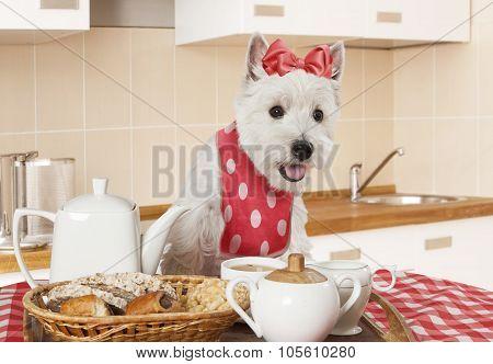 West Highland White Terrier Puppy In The Kitchen