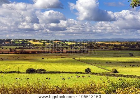 Rural Scenic View Of Green Fields, Salisbury, England