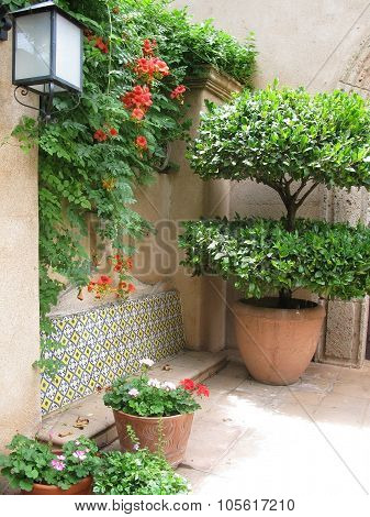 Terracotta pots with green plants