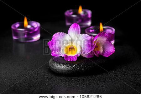 Beautiful Spa Concept Of Purple Orchid Dendrobium With Dew On Black Zen Stone And Lilac Candles, Clo