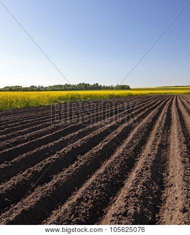 plowed field . Blue sky.